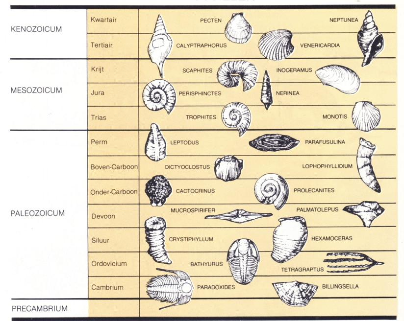 dating the fossil record lab
